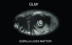 GLM Gorilla Lives Matter Funny Desktop Computer Wallpaper Background Meme