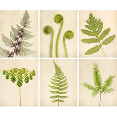 Fern Prints, Botanical Prints, Green Art, Nature Photography Set, Fern... (€94) ❤ liked on Polyvore featuring home, home decor, wall art, floral home decor, green home decor, green home accessories, photo wall art and photographic wall art