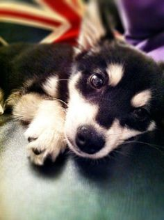 Liam Payne of One Direction Gets a Puppy. The Puppy Gets Death Threats. What's Wrong Here? | Dogster