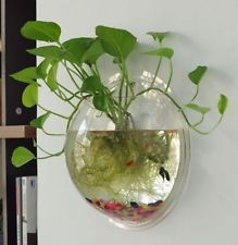 3 Sizes New Home Decoration Pot Plant Wall Hanging Bubble Fish Bowl Acrylic Bowl Fish Tank Aquarium Hanging Plant Wall, Hanging Flower Pots, Flower Planters, Flower Vases, Wall Planters, Hanging Vases, Diy Flower, Indoor Water Garden, Indoor Plants