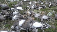 Take action and prosecute this criminal network of ecological terrorism…