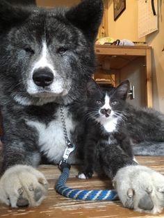 色も柄もそっくりな犬と迷い猫 出会った日から親子のような関係に - BIGLOBEニュース