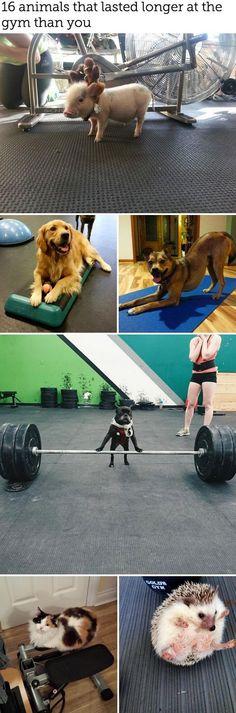 Gym inspiration, puppy style.