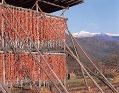 初冬の風物詩、干し柿作り、村上の鮭、信州の寒天干し - 後藤和弘のブログ