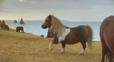 It doesn't get any better than a Moonwalking Pony