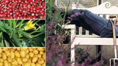 Les 10 fruits et légumes les plus simples à cultiver