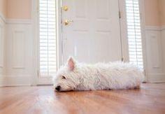 Sad dog laying at front door