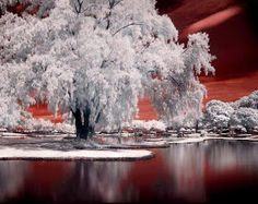 Page 13 of Calming pictures to enjoy Calming Pictures, Cool Pictures, Cool Photos, Amazing Photos, Winter Pictures, Beautiful Dream, Beautiful World, Snow Light, Merry Christmas