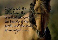 GOD made horses                                                                                                                                                     More