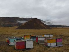 bees. photo by mount eerie