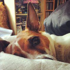 seus animais de estimação 7 Diário Awww: Confira seus animais de estimação bonito!  (51 fotos)