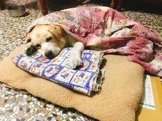 Il est essentiel de savoir reconnaître le moment où votre chien se sent mal – plus tôt vous réalisez qu'il a un problème, et plus vite vous pourrez lui apporter de l'aide. Le problème, c'est que les signes indicateurs d'une maladie sont souvent très subtils, chez les chiens. - Publicité - Leur instinct est de …