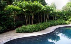Zwembadtuin Aerdenhout « Bart Hoes Meerstammige bomen zijn erg mooi!