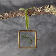 Check out Square Frame Ornament from Terrain Winter Christmas, Christmas Tree, Thrift Shop Finds, Frame Ornament, Ornaments, Outdoor Garden Furniture, Flower Decorations, Outdoor Gardens, Planting Flowers