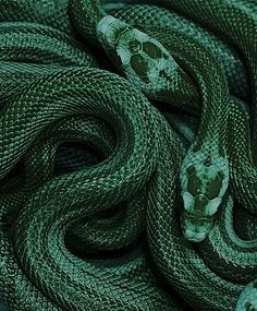 "harry potter meme: house — slytherin ""Or perhaps in Slytherin you'll make your real friends, those cunning folk use any means to achieve their ends. Slytherin House, Slytherin Pride, Hogwarts Houses, Slytherin Snake, Ravenclaw, Slytherin Aesthetic, Harry Potter Aesthetic, Draco Malfoy Aesthetic, Terra Verde"