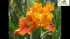 6.000 Pflanzenbilder auf DVD - Blick in Pflanzen-Foto-DVD