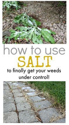 How to use salt to control weeds