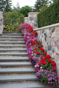 Amazing Flower Pot Displays on Stairs - Paige's Party Ideas Line your porch stairs with amazing flower pots. Make your front or back porch look stunning with colorful pots. Tips and tricks to planting the most pretty outdoor flowers. Outdoor Flowers, Garden Spaces, Amazing Flowers, Dream Garden, Garden Inspiration, Beautiful Gardens, Garden Landscaping, Landscaping Ideas, Container Gardening