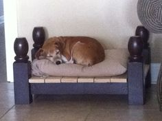 Platform bed for pet made out of footboard and headboard