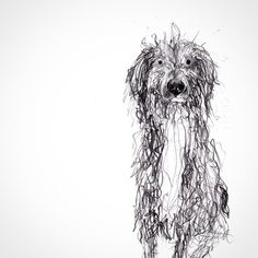 Catherine Rayner, drawing of her friend's dog Bertie