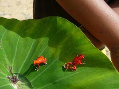 Red Frog Beach, Boca del Toro, Panama...been here, it's beautiful!!!