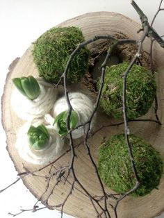 summer plants This impression (spring decorative fireplace awesome especially moss balls for our cam Deco Floral, Arte Floral, Christmas Flowers, Christmas Diy, Christmas Decorations, Spring Decoration, Spring Bulbs, Ikebana, Christmas Inspiration