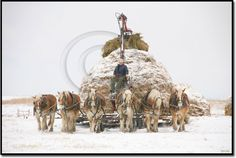 feeding hay on the Haythorn Ranch  Images West Studios photo