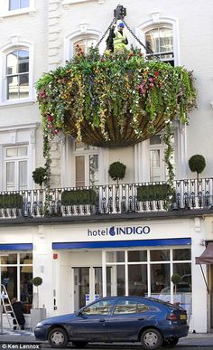 From Babylon to Britain: The World's Largest Hanging Flower Basket