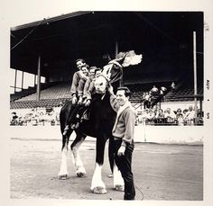 Osmond Brothers & Andy Williams Osmond Family, Andy Williams, The Osmonds, Marie Osmond, Music Like, Black And White Pictures, Diy Stuff, Brother, Horses