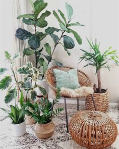 DIY Decor Ideas To Give Your Space That Log Cabin Vibe. If you're into boho ru., 4 DIY Decor Ideas To Give Your Space That Log Cabin Vibe. If you're into boho ru., 4 DIY Decor Ideas To Give Your Space That Log Cabin Vibe. If you're into boho ru. Plantas Indoor, Living Room Decor, Bedroom Decor, Plants In Bedroom, Plant Rooms, Living Room Plants Decor, Bed In Living Room, House Plants Decor, Design Bedroom