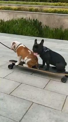 Starts off so smooth - Tierbilder - Perros Funny Dog Fails, Funny Animal Videos, Cute Funny Animals, Funny Animal Pictures, Cute Baby Animals, Animal Memes, Funny Dogs, Animals And Pets, Dog Memes