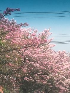 Av Marques de São Vicente, São Paulo, SP, Brasil.