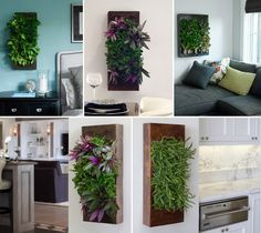 Living walls for inside the home and in the backyard patio.