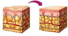 Dr Oz Phytoceramides – Facelift in a Pill You have undoubtedly heard about this powerful anti-aging pill as mentioned by Dr. Oz, so here is some detailed information on how phytoceramides work and what to expect from the benefits and… Continue Reading → Shape Magazine, Health Magazine, Dr Oz, Fitness Workouts, Creme Anti Celulite, Anti Aging, Anti Ride, Anti Wrinkle, Cellulite