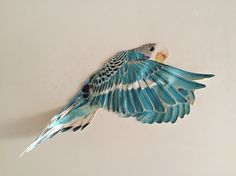 I Like Birds, Pretty Birds, Little Birds, Beautiful Birds, Illustration Art, Illustrations, 3d Drawings, Craft Art, Color Stories