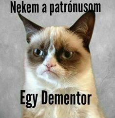 Grumpy Cat Magyar Saját Mémek Harry Potter Pictures, Grumpy Cat, Tumblr Funny, Really Funny, Funny Jokes, Haha, Funny Pictures, Memes, Animals