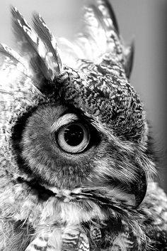 Hibou en noir et blanc