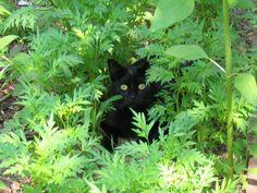 http://www.greenoasisgarden.net/Pages/gardencats.aspx