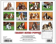 Just Basset Hound Puppies 2015 Calendar