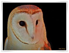 Mike's Cornwall: The Owl Sanctuary and Reflections Of An Owl's Eye. More on my blog. #cornwall #owl  #birds #owls