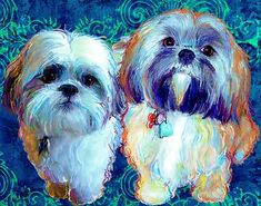 shih tzu paintings - Google Search