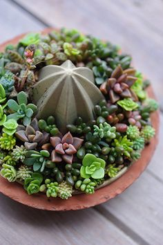 Great example of upcycling things from around the house: Succulents in a juicer.