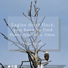 Eagles don't flock, you have to find them one at a time. Classic Quotes, Word Pictures, Flocking, Eagles, Writers, Finding Yourself, Words, Inspiration, Biblical Inspiration