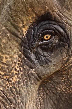 elephant eye     Joy, anger, grief, compassion, love; the finest emotions reside within these hulking masses. Through years of research, scientists have found that elephants are capable of complex thought and deep feeling. In fact, the emotional attachment elephants form toward family members may rival our own.