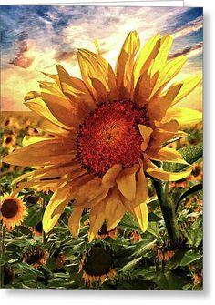Sunflower Garden, Sunflower Art, Sunflower Fields, Sunflower Paintings, Watercolor Flowers, Watercolor Art, Graffiti Kunst, Sunflowers And Daisies, Sun Flowers