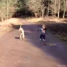 Wait here for a sec, I gotta jump in this puddle. - fotos engraçadas gatos e cachorros - Funny Videos For Kids, Cute Baby Videos, Cute Animal Videos, Funny Animal Pictures, Pet Videos, Videos Funny, Cute Funny Babies, Cute Funny Animals, Cute Baby Animals