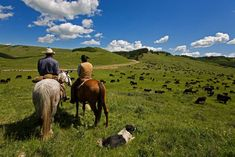 Ranch Vacations in Tuscany, Experience Ranch vacations in Italy for #Horse & #Rider,  with pony trekking & riding trails in beautifull Parks  booking online on http://www.equestrianitaly.com and start to ride!