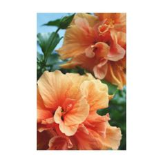 Beautiful Hibiscus Flower Pair Canvas Print
