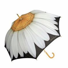 Daisy Cane Umbrella Auto Open - Viola #Umbrella.