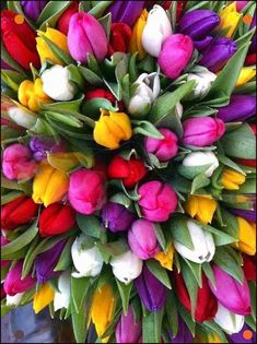 tulips, this would make a beautiful bouquet Flower Vases, Flower Art, Flower Quotes Love, Wreath Drawing, Pink And White Flowers, Tissue Paper Flowers, Cremation Urns, Flowers Perennials, Flowers Garden